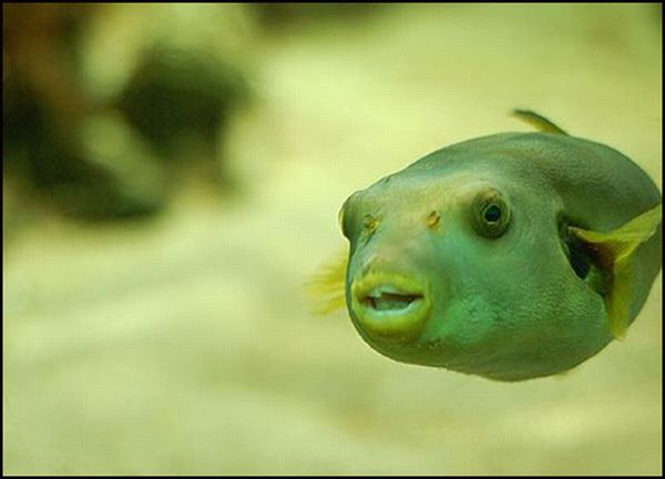 Fishes With Human Like Expressions on the Faces (30 pics)