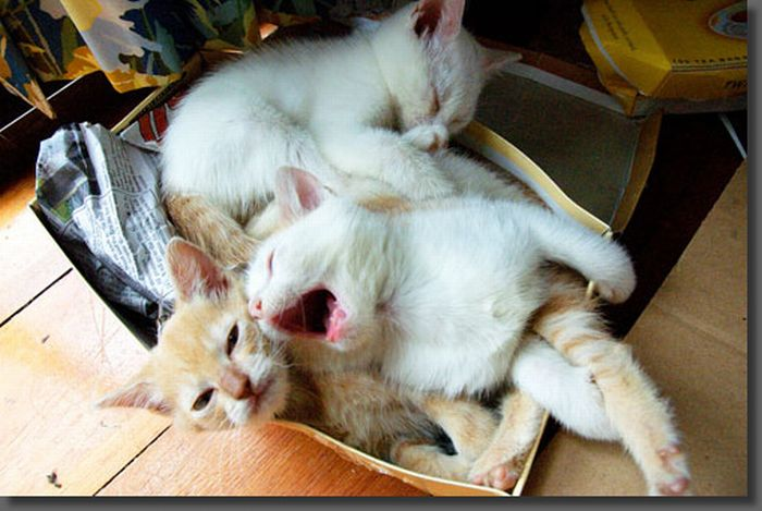 Kittens Yawning (20 pics)