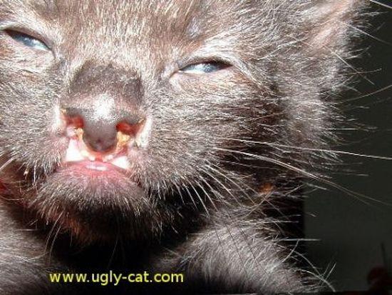 Ugly Cats (46 pics)