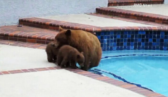 When Bears Come for a Visit (11 pics)