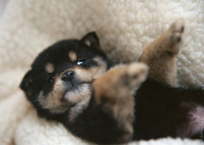 Cute Puppies (110 pics)