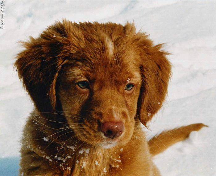 Cute Puppies (110 pics)