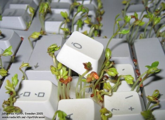 Cress in Keyboard. How To (8 pics)