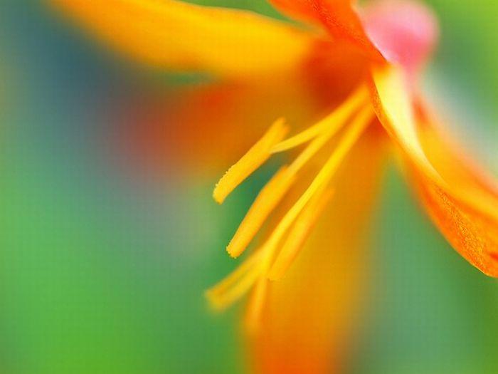 Beautiful Photographs (32 pics)