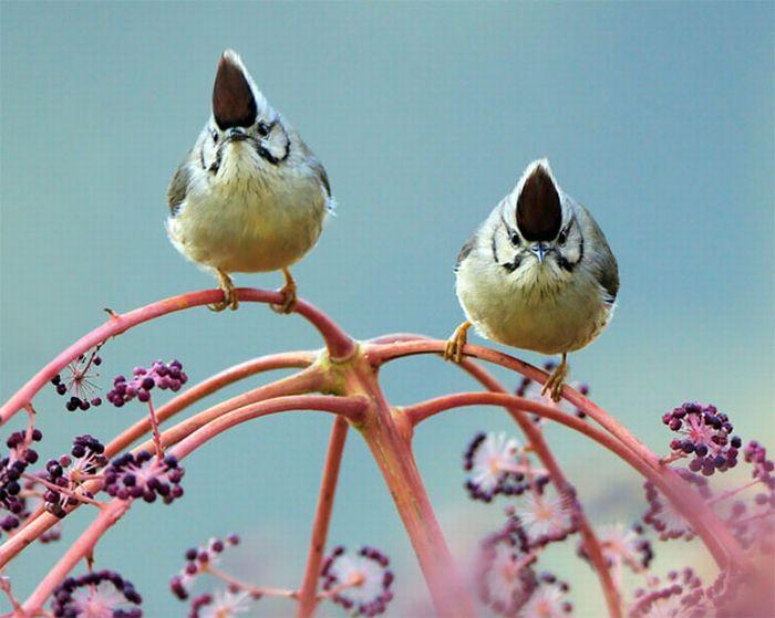 Beautiful Bird Photos by John & Fish (40 pics)