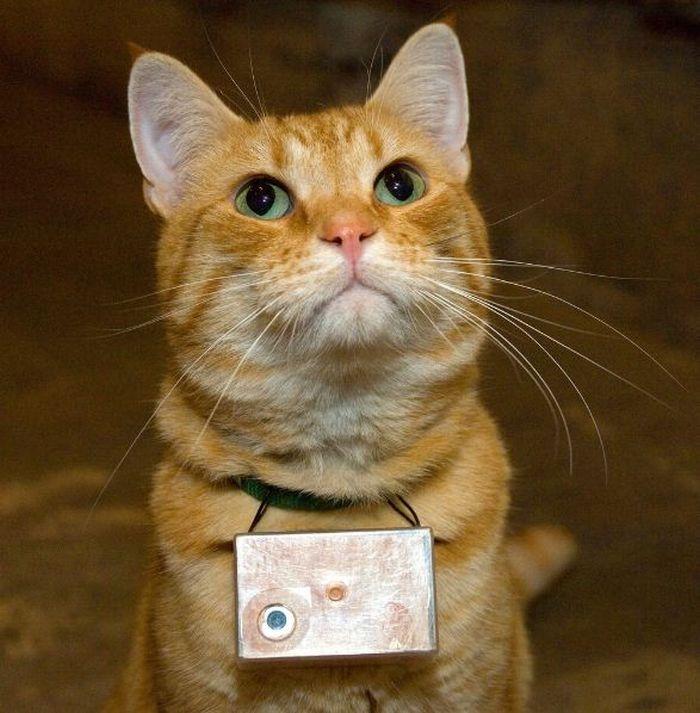 Seeing Life through Cat's Eyes (75 pics)