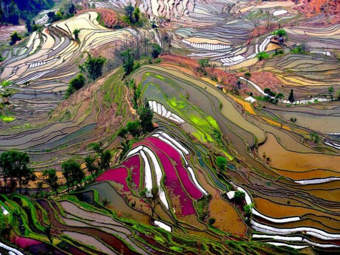 Beautiful Terraced Rice Fields (36 pics)