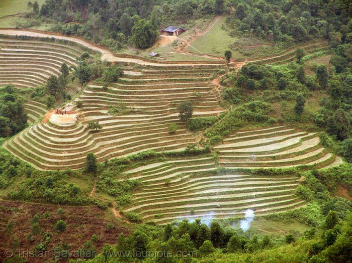 Beautiful Terraced Rice Fields (36 pics)