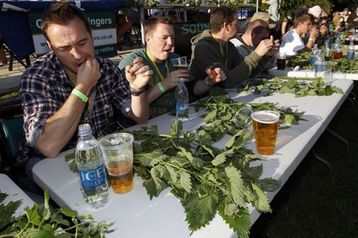 Nettle Eating Championship (8 pics)