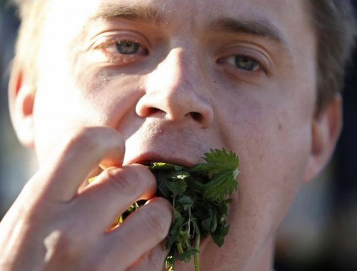 Nettle Eating Championship (8 pics)
