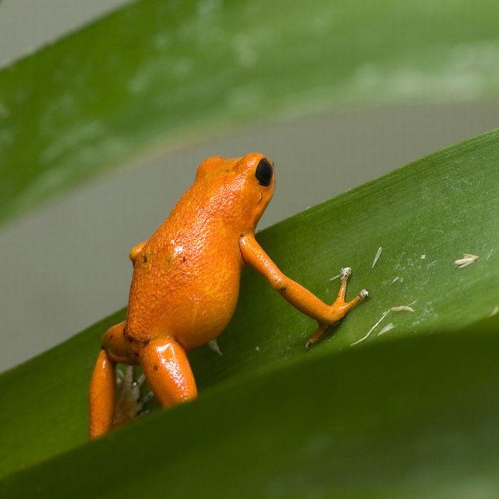 Orange Color Animals (17 pics)