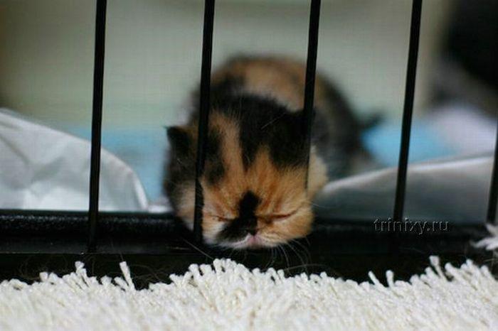 Adorable Tiny Kitten (15 pics)