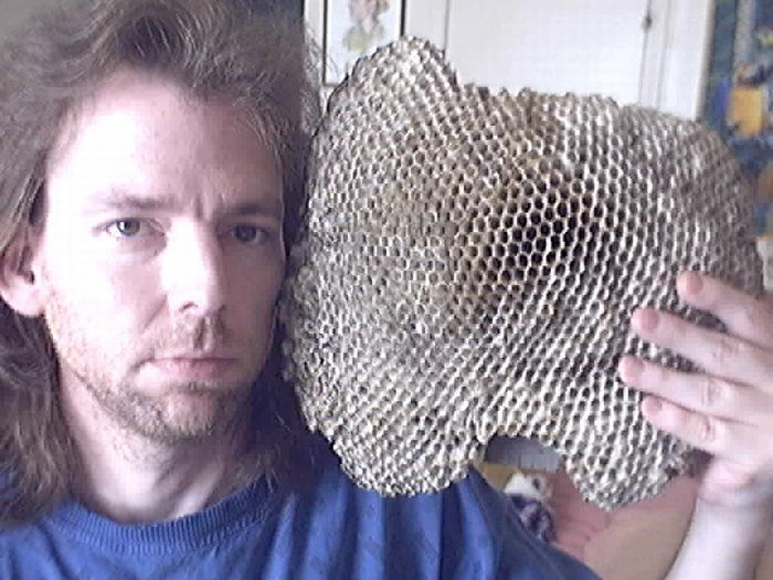Impressive Wasp Nest Collection of Hornet Boy (16 pics)