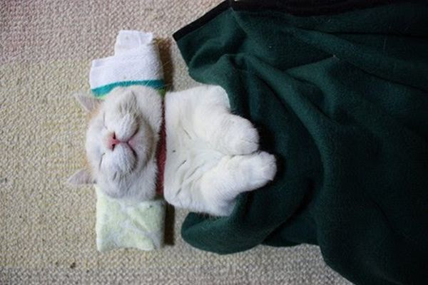 The Most Relaxed Cat in the World (25 pics)