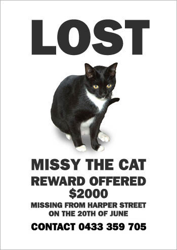 Make Me a Poster of My Missing Cat (19 pics)