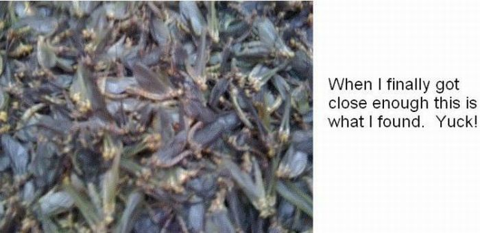 When Fishflies Attack (5 pics)