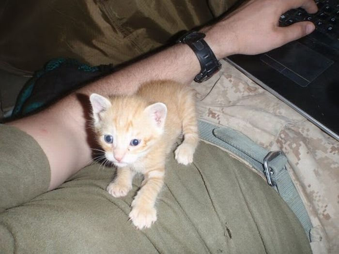Kittens Found by US Marines in Afghanistan (21 pics)