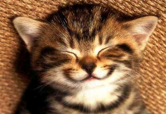 Smiling People and Animals (55 pics)