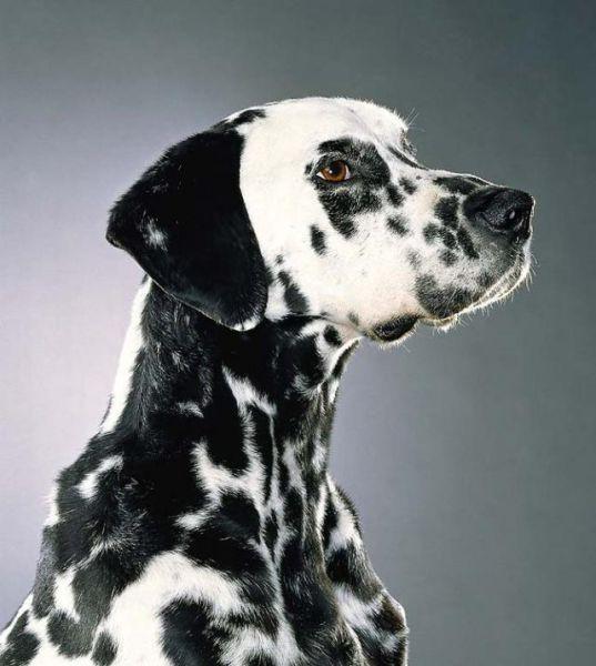 Dog Portraits (24 pics)