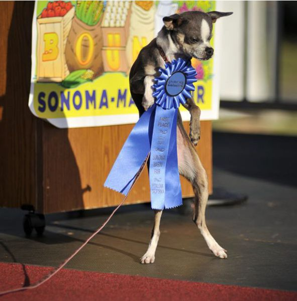 The Ugliest Dog Contest 2010 (22 pics)