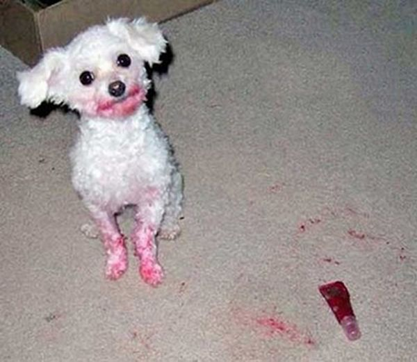 Hilarious Dog Fails (25 pics)