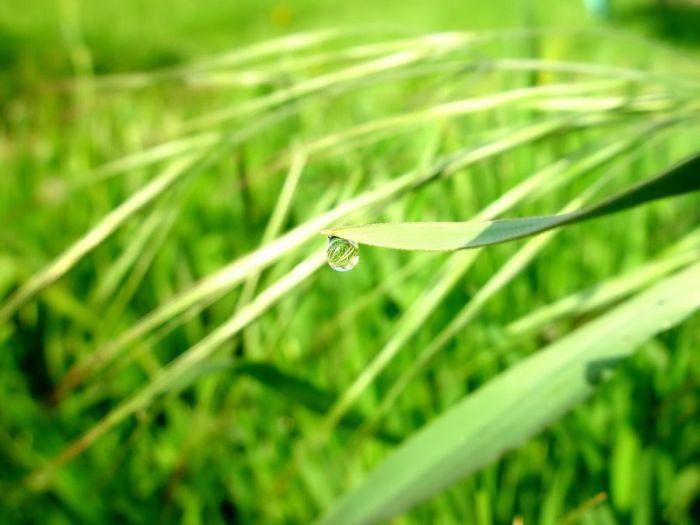 Beautiful Dew Pictures (59 pics)