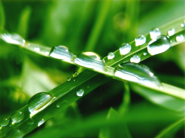 Beautiful Dew Pictures (59 pics)