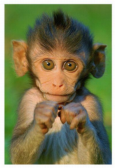 Monkeys With Mohawks (30 pics)