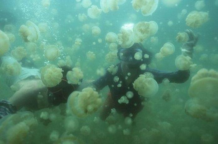 Jellyfish Lake (20 pics)