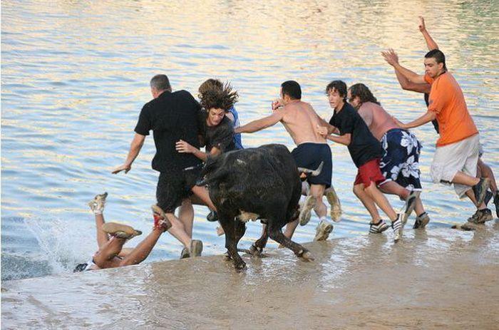 Running with Bulls (25 pics)