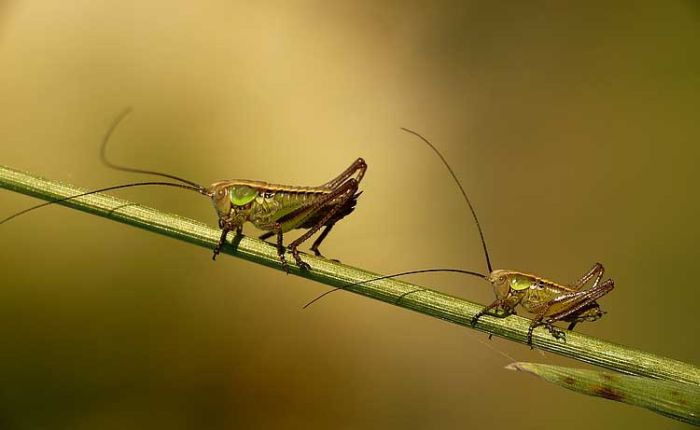 Beautiful Photos of Insects (20 pics)