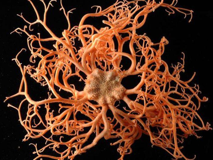 Beautiful Underwater Creatures of the Atlantic Ocean (10 pics)