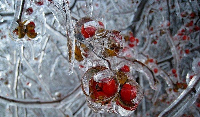 Beautiful Winter Photos (49 pics)
