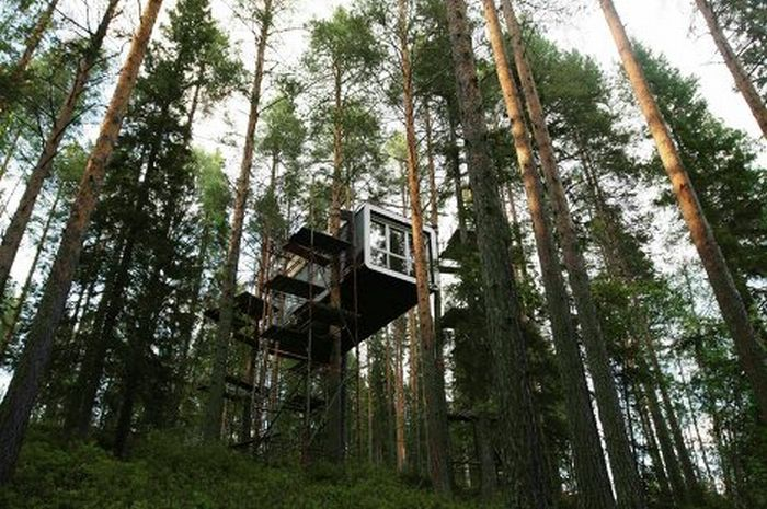 Treehotel in Sweden (14 pics)