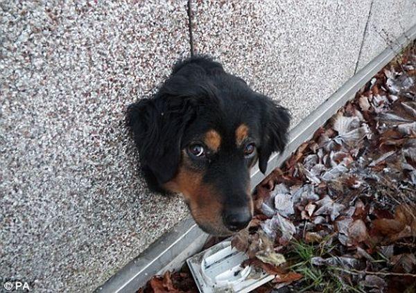 Dog Tries to Escape (3 pics)