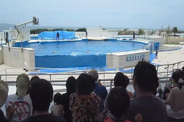 A Dolphin Jumped Out Of the Pool (5 pics)