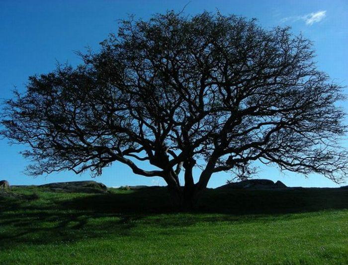 Beautiful Trees (16 pics)