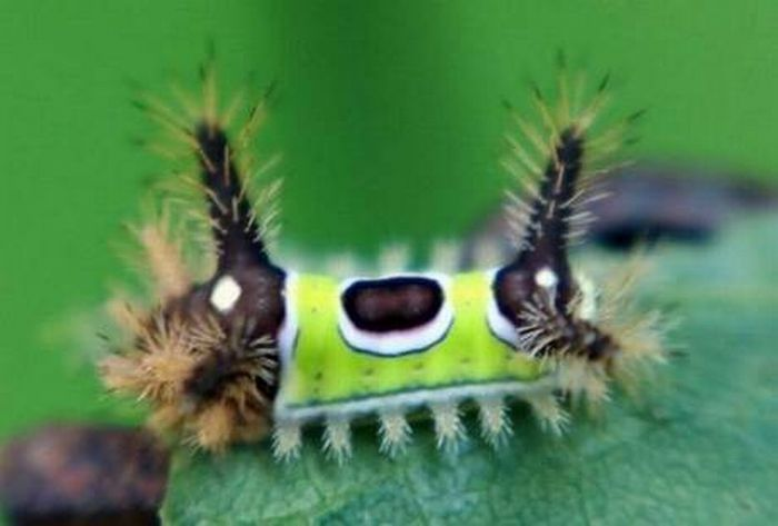Insects That Look Like Aliens (16 pics)