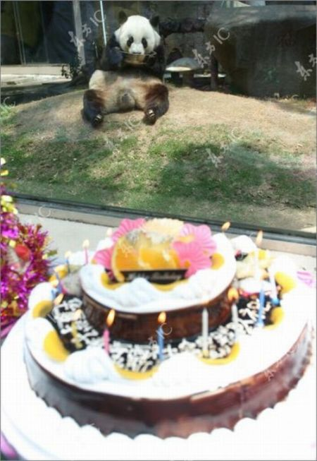 The Oldest Panda in China Celebrates Her 30th Birthday (9 pics)