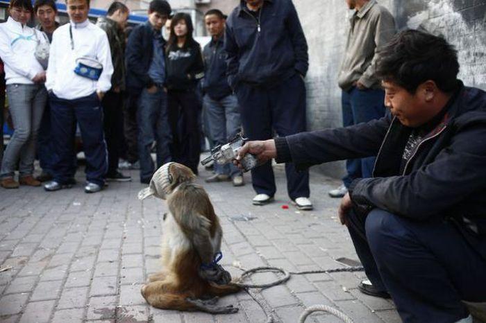 Unusual News Photographs (84 pics)