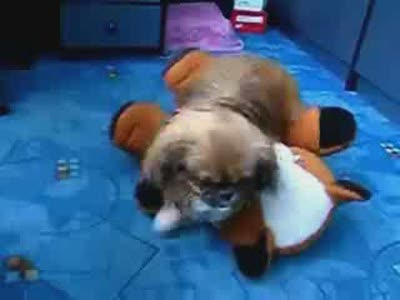 A Dog Passes Out While Humping a Toy
