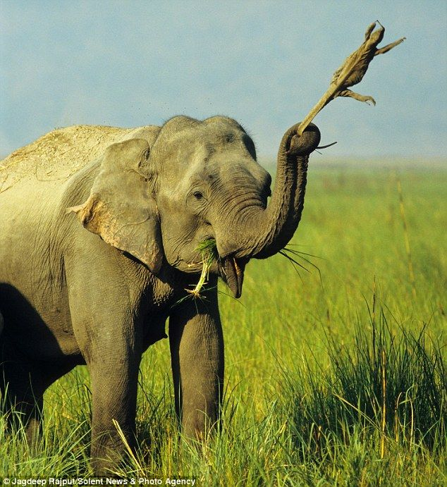 Elephant And a Very Unfortunate Lizard (3 pics)