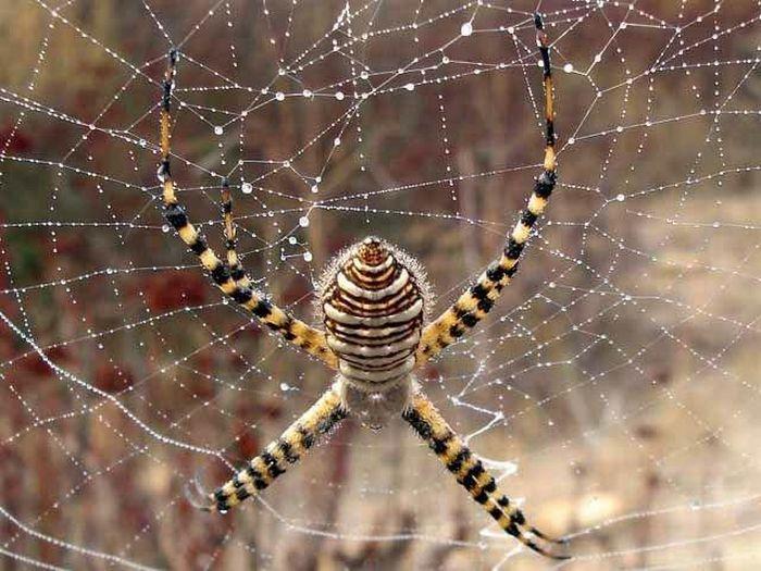 Mantis vs a Spider (8 pics)