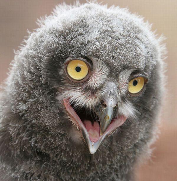 Funny Owls (21 pics)