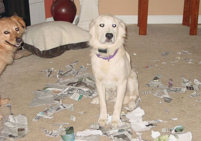Animals. Home Alone. Part 2 (43 pics)