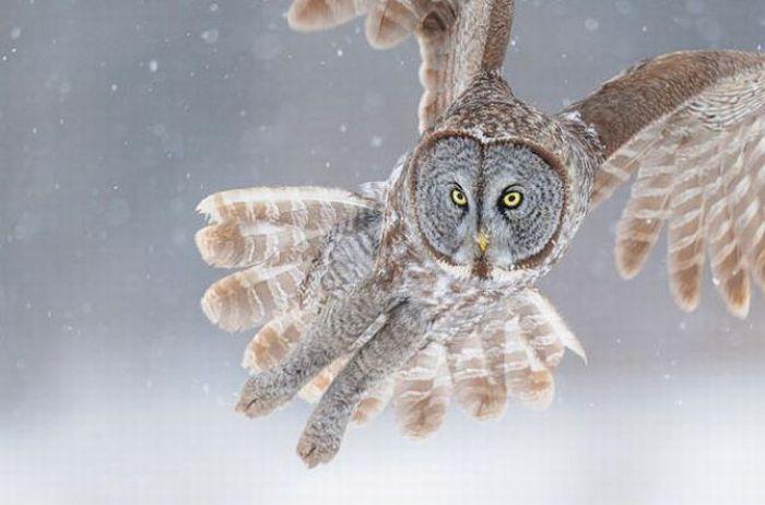 Amazing High Speed Photographs (12 pics)