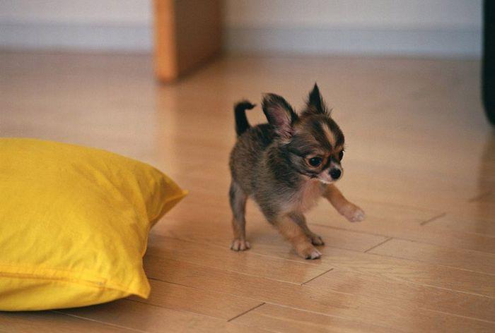 Cute Puppies (25 pics)