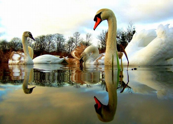 Amazing Еxamples of Reflection Photography (30 pics)