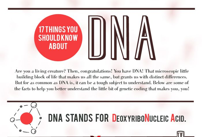 17 Things You Should Know About DNA (Infographic)