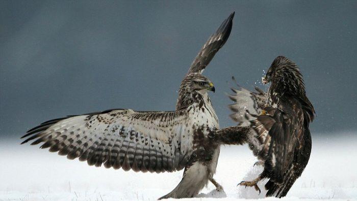 Kung Fu Birds (7 pics + gif)